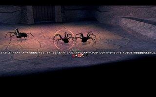 毒黒クモ.jpg